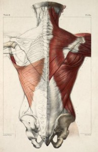 back-anatomy-physiotherapy